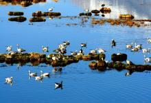 肃北盐池湾国家级自然保护区被列入全球雪豹保护计划