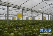 在绿色发展中崛起——甘肃十大生态产业发展观察
